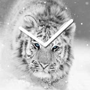 "Innova Часы W09660 ""Белый тигр"", квадратные, стекло, размер 30*30 см (10/120)"