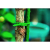GTT-25 GREEN APPLE Подвязка регулируемая 17см (160/2560)